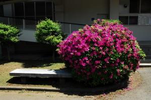 草花(カラー)
