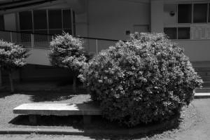 草花(白黒)