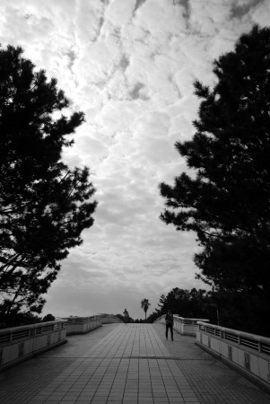 海浜幕張公園(白黒)(2)